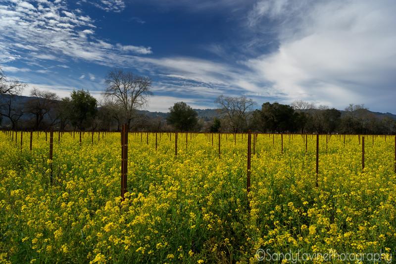 Meadowood VIneyard Mustard