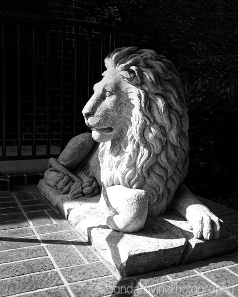 Charter Oak Lion