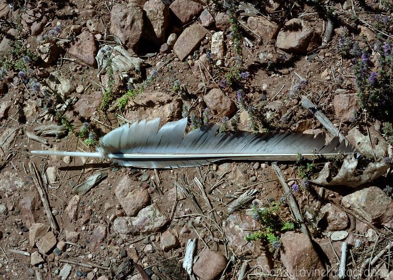 Shasta Lake Feather