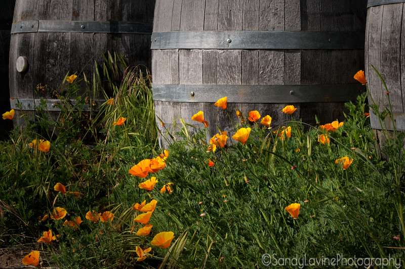 Poppies and Barrels