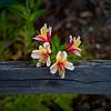 Flower Perch