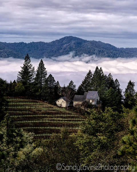 Early Morning Napa Valley Fog