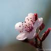 Single Flower Number 2