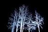 """""""Sushi Hana's Trees at Night"""" 12/26/09"""