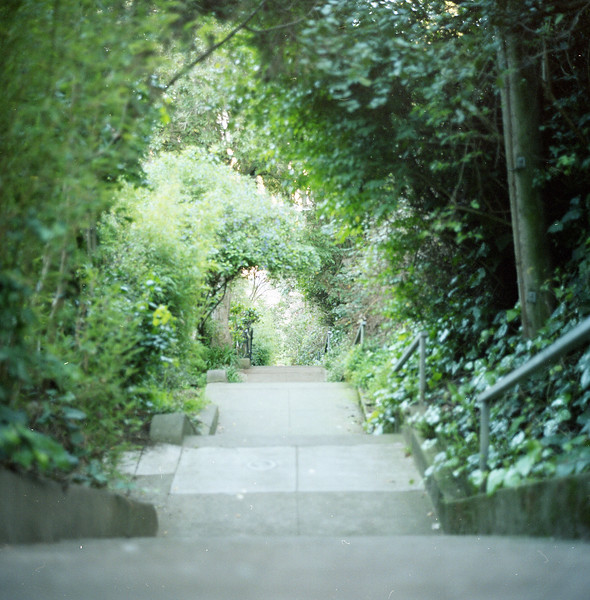 The Vulcan steps leading down through a beautiful Upper Market neighborhood.  Kodak Portra 400