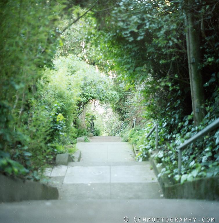 The Vulcan steps leading down through a beautiful Upper Market neighborhood.  Kodak Portra 400