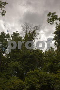 2014-05-17_TWEP_Collins_00062