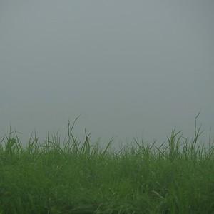 les brins d'herbes et les nuages - day#198 - year#08