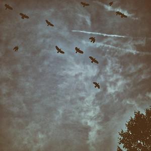 le vol noir des corbeaux sur nos plaines - day#295 -  year#06