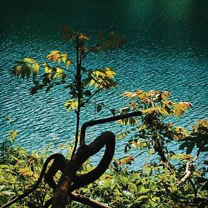 il était midi au bord de l'étang - day#154 - year#08