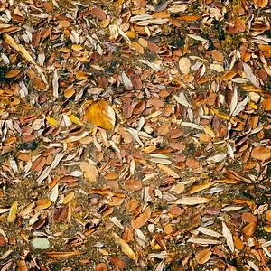 Autumn ready - day#194 - year#06