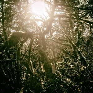le soleil d'hiver qui permet d'échapper aux méchants et aux fourmis rouges - day#019 - year#07