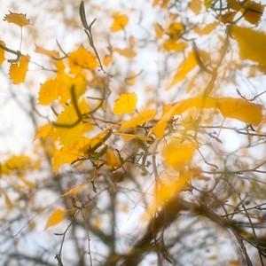 des feuilles, des arbres, des bûches - day#358 - year#05