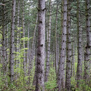 walking among the trees - day#131 - year#06