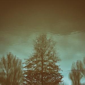 flotter à la surface  - day#018 - year#08