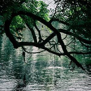 l'histoire de la branche de l'arbre qui voulait traverser le Doubs - day#275 - year#08