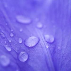 larmes de peau bleue - day#137 - year#06