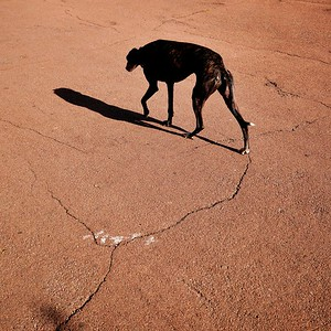 chien à la ligne - day#288 - year#05