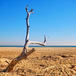 Sur la plage abandonnée- day#058 - year#06