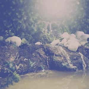 baignade dans la jungle - day#188 - year#06