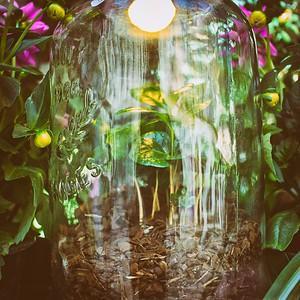 Jar Jar Jungle - day#133 - year#06