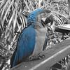 macaw 21 jpg