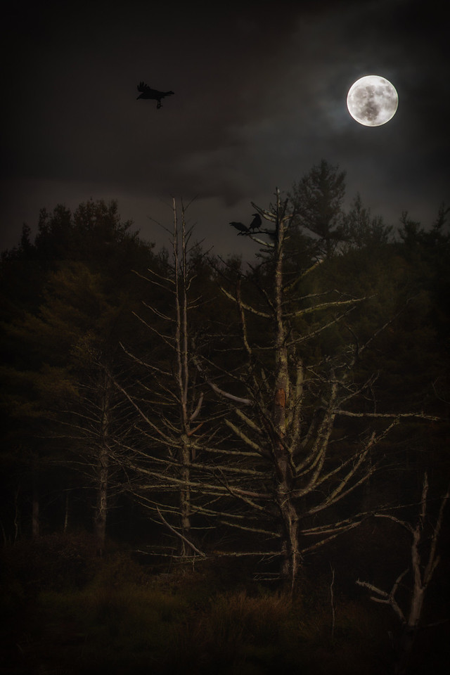 Beaver Dam and the Ravens at Night