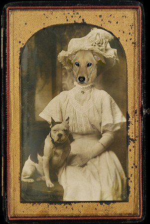 Max, Carolina dog, on Mary Edith Beard, dressed as a gibson girl.