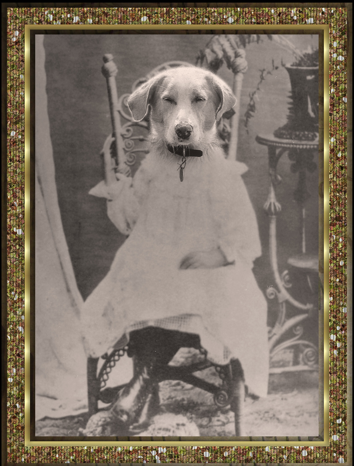 L.C., (stood for Little Cow), was my parents dog. She was a dingo mix. Her head is on Great Grandma's childhood picture.