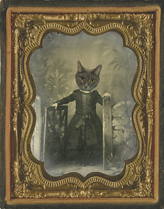 Rosie, another one of our cats, on the childhood body of Mary Edith Beard. The original is a tintype.