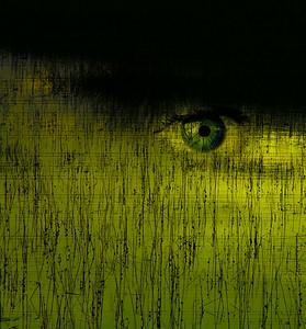 Musical Swamp