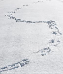 015-snow_tracks-wdsm-14feb09-c1-1321