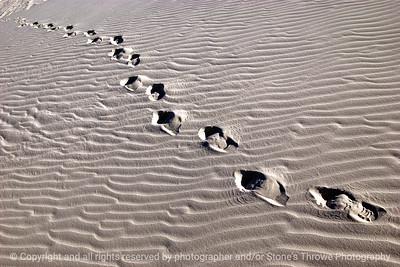 015-footprints-white_sands_ntl_monument_nm-02dec06-09x06-009-300-5014