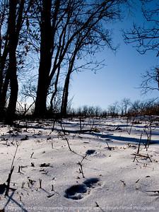 015-winterscape-wdsm-13jan12-001-3093
