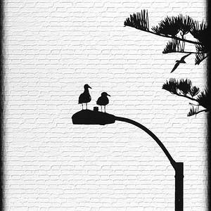 Birds watching birds