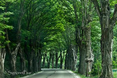 Road to La Brigue/Briga