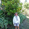 Project Leader Becky Lau by a ho'awa tree (Pittosporum sp.), an endemic species. (Photo by Shannon Paapanen).