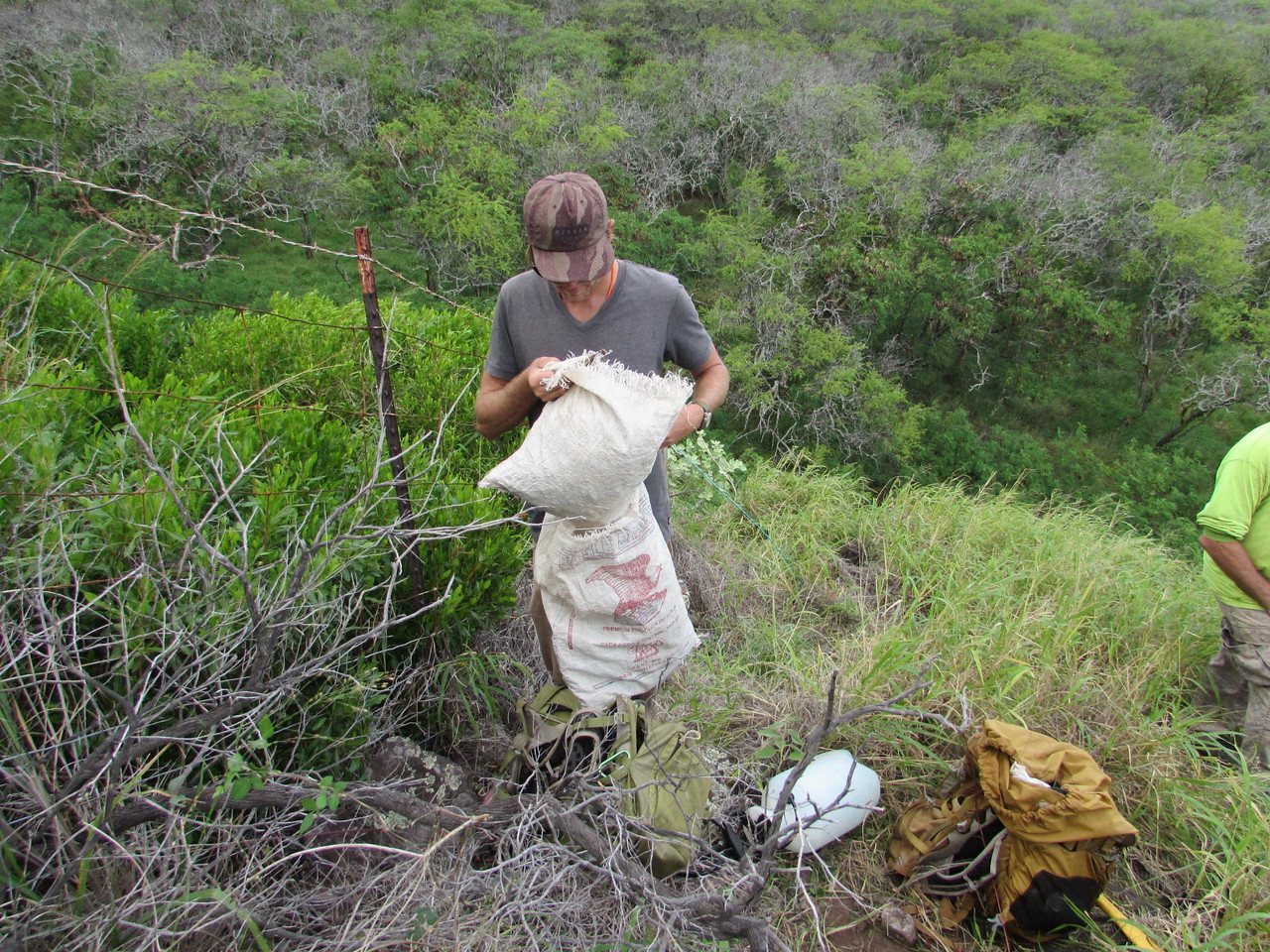 Hank provided rice bags to hold the seed pods we picked. They got dumped a fair distance downwind from the exclosure.