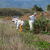Becky Lau (left) and Janet Allen (right) reducing a large Pluchea bush to.... (see next picture).