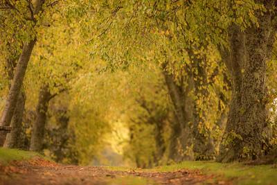 Green roadies Keith