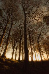 Den Woods at sunrise