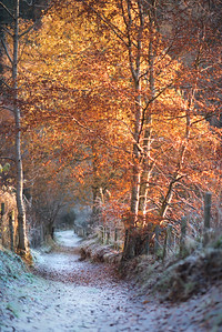 Image 2 Walk down to the Green Brig Dunnyduff Wood. Keith