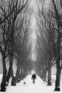 Greenroadies in winter