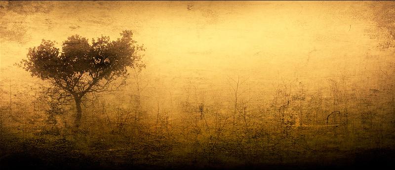 Screen Shot 2021-02-03 at 12.00.01 PM