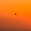 Hummingbird silhouette at sunset