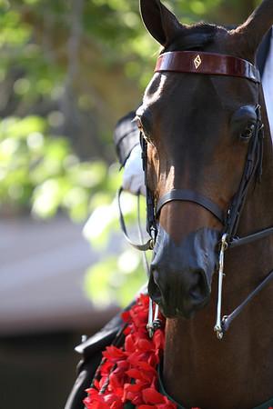 Under Saddle Portrait
