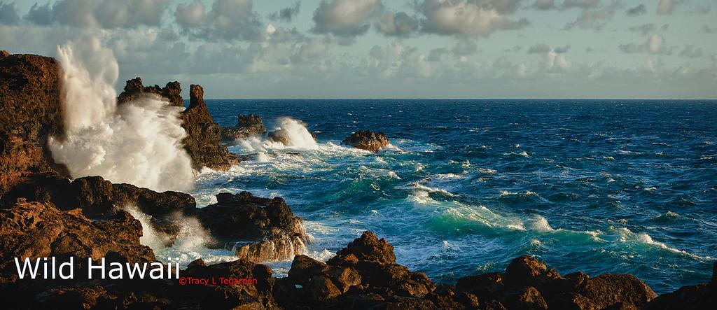 Wild Hawaii