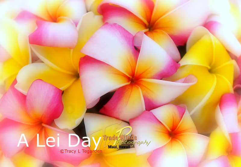 A Lei Day