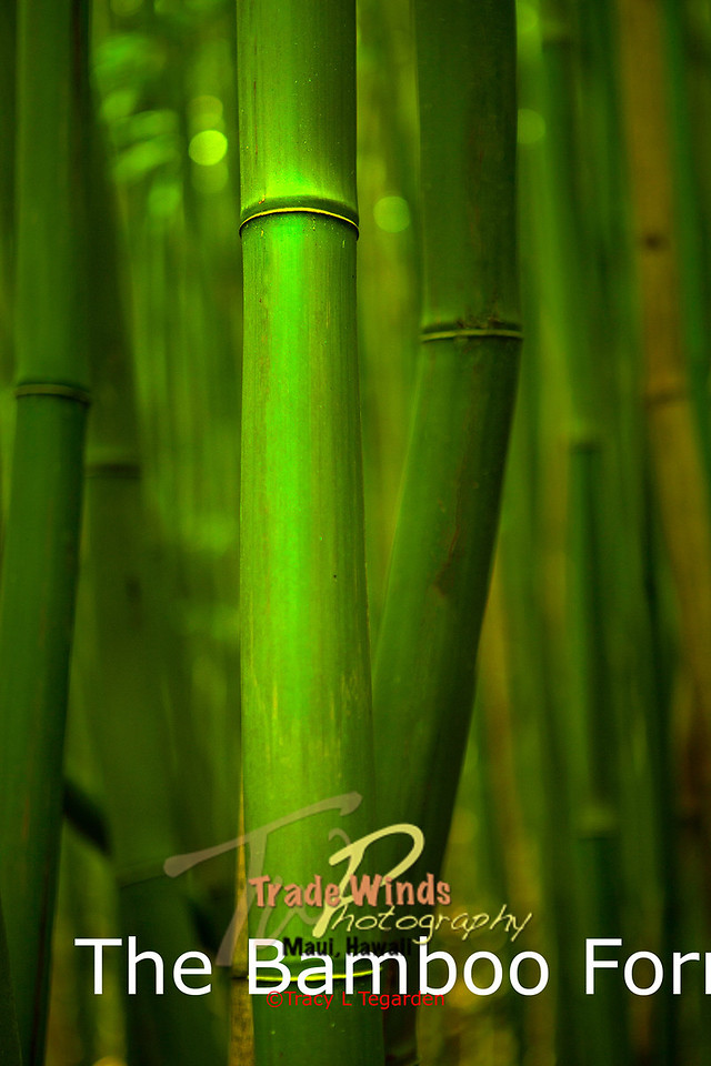 The Bamboo Forrest