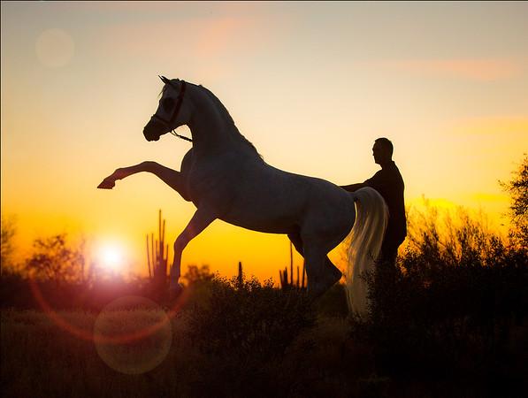 Gary McDonald Arabians